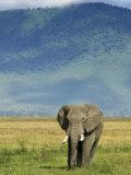 African Elephant, Ngorongoro Crater, Arusha, Tanzania Photographic Print by Ariadne Van Zandbergen