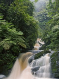 River Running through Montane Rainforest, Nyungwe Forest National Park, Gisenyi, Rwanda Fotografisk tryk af Ariadne Van Zandbergen