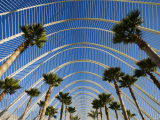 L'Umbracle, The Palm-Lined Promenade at Ciudad de las Artes y las Ciencias, Valencia, Spain Photographic Print by Greg Elms
