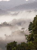 Mist Rising from Forest Floor, Nyungwe Forest National Park, Gisenyi, Rwanda Fotografie-Druck von Ariadne Van Zandbergen