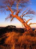 Sunset on Southerm Summit of Nobs, Alpine National Park, Victoria, Australia Photographic Print by Glenn Van Der Knijff