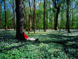 Man Resting Against Tree amidst Anemones in Spring, Dalby Soderskog National Park, Skane, Sweden Photographic Print by Anders Blomqvist