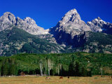 Grand Teton, Near Cottonwood Creek, Grand Teton National Park, Wyoming Photographic Print by David Tomlinson
