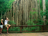 Protective Boardwalk Surrounding the Curtain Fig Tree Located on the Atherton Tablelands, Australia Photographic Print by Ross Barnett