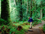 Man Near Ferns on Marymere Falls Trail, Olympic National Park, Washington Photographic Print by John Elk III