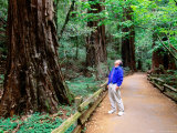 Man on Walkway in Redwood Forest, Muir Woods National Monument, California Photographic Print by John Elk III