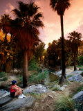 Agua Caliente Indian Reserve Palm Canyon, Upper Canyon, Palm Springs, California Photographic Print by John Elk III