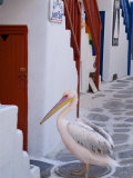 Pelican Standing in Alleyway, Mykonos Island, Southern Aegean, Greece Photographic Print by Diana Mayfield