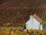 Autumn Vineyards and Farmhouse, Cote de Beaune, Beaune, Burgundy, France Lámina fotográfica por Oliver Strewe