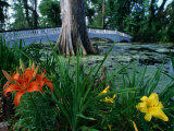 Flowers in Gardens at Magnolia Plantation, Charleston, South Carolina Photographic Print by John Elk III