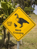 Nene Wild Goose Crossing Sign, Kokee State Park Photographic Print by John Elk III