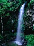 Crystal Shower Falls on the Wonga Walk Trail in Dorrigo National Park, New South Wales, Australia Photographic Print by Ross Barnett