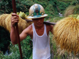 Combulo Villager Bringing Home the Palayi, Banaue, Cagayan Valley, Philippines Photographic Print by Oliver Strewe