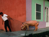 Villager Pulling Pig on Rope, Tlacotalpan, Veracruz-Llave, Mexico Photographic Print by Jeffrey Becom