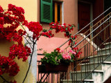 Flowers and Painted Houses in Town in Cinque Terre, Manarola, Liguria, Italy Photographie par Diana Mayfield