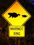 Marmot Crossing Sign Near Maroon Bells, Aspen, Colorado Photographic Print by Holger Leue