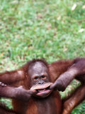 Orangutan Pulling a Face at the Matang Wildlife Centre, Kuching, Sarawak, Malaysia Photographic Print by John Banagan