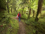 Track to Moira Gate Arch, Kahurangi National Park, New Zealand Photographic Print by David Wall