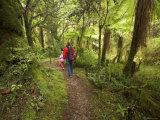 Track to Moira Gate Arch, Kahurangi National Park, New Zealand Photographic Print by David Wall