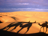 Camel Ride Shadows Across Sahara, Ksar Ghilane, Kebili, Tunisia Reproduction photographique par Christopher Groenhout