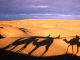 Camel Ride Shadows Across Sahara, Ksar Ghilane, Kebili, Tunisia Fotodruck von Christopher Groenhout