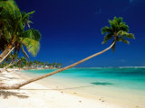 Palm Trees Leaning Towards Sea at Matautu Beach, Matautu, A'Ana, Upolu, Samoa Fotografie-Druck von Peter Hendrie