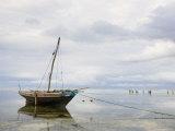 Fishing Dhow in Matemwe Village on East Coast, Tanzania Photographic Print by Ariadne Van Zandbergen
