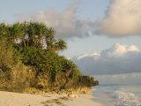 Trees Beside Shore, Nungwi, Zanzibar North, Tanzania Photographic Print by Ariadne Van Zandbergen