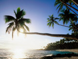 Sun Shining Off Water and through Palm Tree at Return to Paradise Beach, Upolu, Samoa Fotografie-Druck von Peter Hendrie