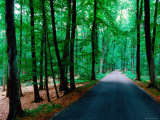 Road through Forest of Fontainbleau, Fontainebleau, Ile-De-France, France Photographic Print by John Elk III