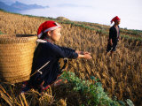 Two Ethnic Red Dao Women in Freshly Harvested Rice Field, Sapa, Lao Cai, Vietnam Lámina fotográfica por Stu Smucker