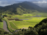 Hanalei Valley with Taro Fields Below, Kauai, Hawaii Photographic Print by John Elk III