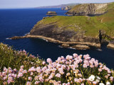 Wildflowers on Rugged Cliffs, Tintagel, Cornwall, England Photographic Print by Glenn Beanland