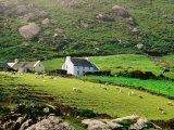 Sheep Grazing Near Farmhouses, Munster, Ireland Fotoprint van John Banagan