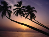 Coconut Trees at Sunset, Mullins Bay, Barbados Photographic Print by Holger Leue