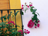 Bougainvillea Flower on Balcony, Cordoba, Andalucia, Spain Photographic Print by John Banagan