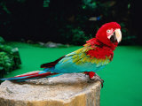 Colourful Parrot at Jurong Bird Park, Singapore Lámina fotográfica por John Elk III