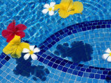 Tropical Flowers in Royal Westmoreland Pool, St James Photographic Print by Holger Leue