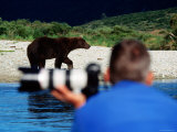 Brown Bear and Photogrpaher along Shelikof Strait, Katmai National Park, Alaska Photographic Print by Mark Newman
