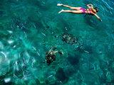 Snorkelling with Sea Turtles, Tiami Catamara Cruise, Folkstone Marine Reserve Photographic Print by Holger Leue