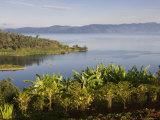 Crops Cultivated on Shores of Lake, Lake Kivu, Gisenyi, Rwanda Fotodruck von Ariadne Van Zandbergen