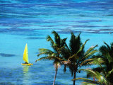 Hobie Catamaran with Coconut Trees in Foreground Photographic Print by Holger Leue
