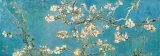 Almond Branches in Bloom, San Remy, c.1890 Poster by Vincent van Gogh