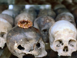 Decoration Sits on One of Many Skulls on Display at Killing Fields, Phnom Penh, Cambodia Photographic Print by Daniel Boag