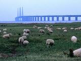 The New Oresund Bridge Between Malmo and Copenhagen from Bunkeflostrand, Malmo, Skane, Sweden Fotografisk trykk av Anders Blomqvist