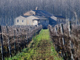 Winery Vines and Buildng, Torgiano, Umbria, Italy Photographic Print by Oliver Strewe
