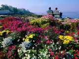 Couple Reading at Ocean Point Shoreline, Flowers in Foreground, Maine Photographic Print by John Elk III