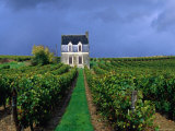 House in a Vineyard, Loire Valley, Chinon, Centre, France Photographic Print by Oliver Strewe