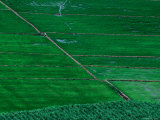Rice Fields Below Sam Mountain in Mekong Delta, Chau Doc, an Giang, Vietnam Photographic Print by Stu Smucker