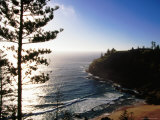 Anson Bay with Norfolk Island Pines, Australia Photographic Print by Holger Leue